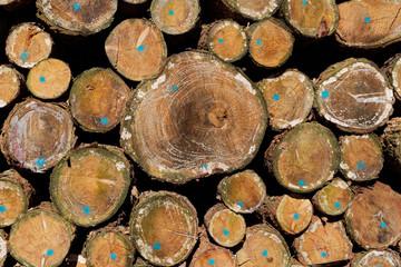 Holz-Hintergrund: Detailansicht der markierten Querschnitte gestapelter Nadelholzstämme