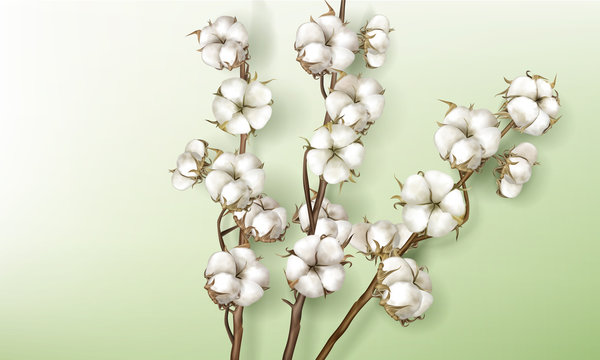 Realistic cotton branches with flowers