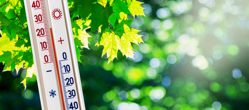The thermometer on the background of green maple leaves in sunny weather shows 25 degrees heat_