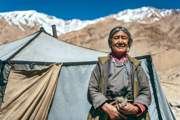 Nomadic old Woman. They live for several months a year in tents, looking for fresh pastures for their goats, from which comes cashmere wool. In Ladakh, Kashmir, India. Fototapete