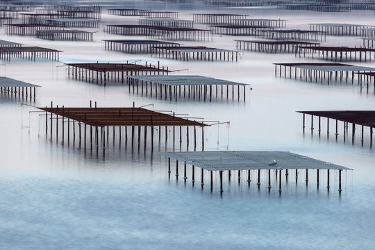 France, Occitanie, Herault, Bouzigues, oysters tables on the lagoon of Thau