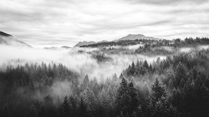 Morning fog rolls in Washington through the trees