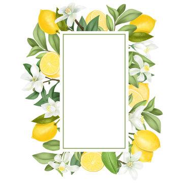 Vertical frame of hand drawn blooming lemon tree branches, flowers, lemons on white background