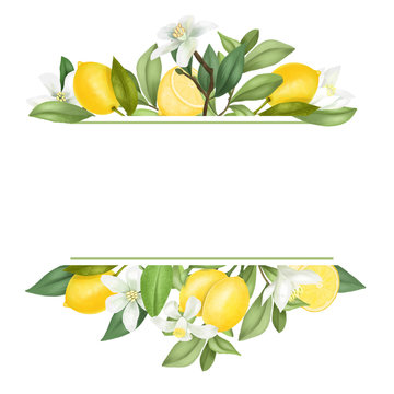 Frame of hand drawn blooming lemon tree branches, flowers, lemons on white background