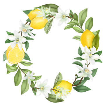 Wreath of hand drawn blooming lemon tree branches, lemon flowers and lemons, isolated illustration on a white background