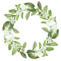 Poster Fleur Wreath of hand drawn blooming lemon tree branches, isolated illustration on a white background