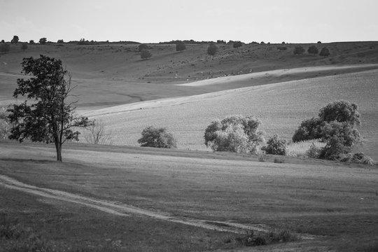 Peaceful Walk Through A Rural Scenery