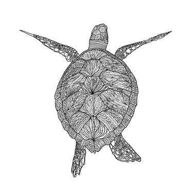 Adult coloring  books. New  Turtle in mandala patterns. Antistress coloring. Patterned tortoise. Coloring.