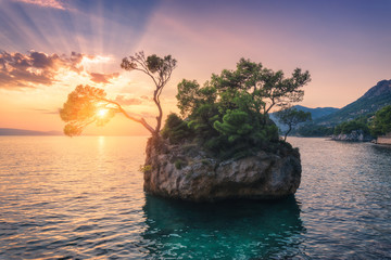 Wall Mural - Beautiful trees with green leaves growing out of the rock at sunset in summer in Croatia. Colorful landscape with blue sea, cliff, mountains and orange sky with sunbeams. Travel. Nature background