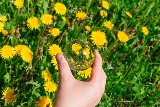Lens ball in hand with reflection of yellow dandelions