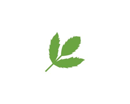 Leaves icon vecto isolated on white background. Various shapes of green leaves of trees and plants.