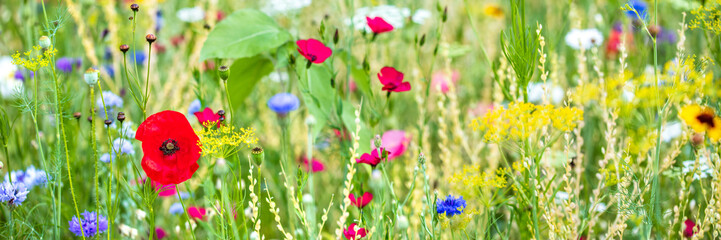 Fotobehang Weide, Moeras Panorama, colorful flower meadow at the heyday, poppies and other wildflowers