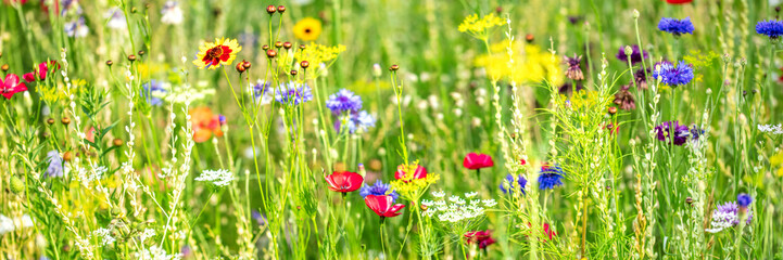 Fototapeta Natural habitat for insects, wildflowers and wild herbs on a flower field, Banner