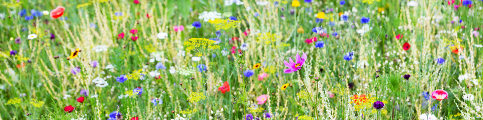 Panorama, wildflower meadow with wild herbs and flowers Papier Peint