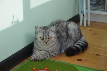 Poster Cat kat