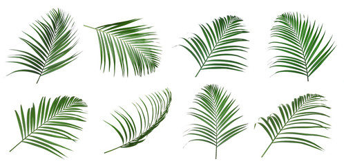 Photo on textile frame Palm tree Set of tropical leaves on white background