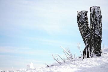 Foto op Plexiglas Bos rivier Frozen Tree Trunk in Winter Time at the Mountains