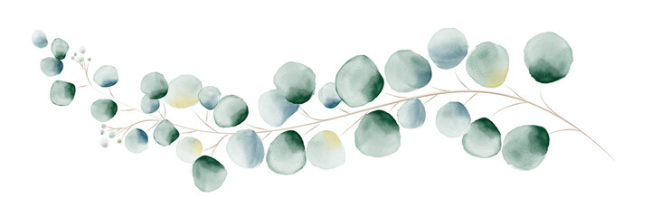 Watercolor green eucalyptus leaves and branches