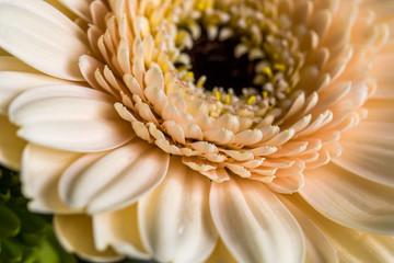 Fototapeten Gerbera fleur gerbera de couleur jaune clair dans un bouquet