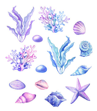 Watercolor seashells, starfish in blue, pink and purple colors.
