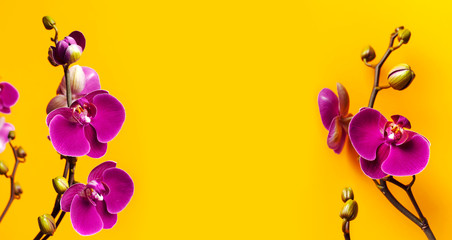 Fotorolgordijn Orchidee Beautiful purple Phalaenopsis orchid flowers on bright yellow background. Tropical flower, branch of orchid close up. Pink orchid background. Holiday, Women's Day, March 8, Flower Card flat lay