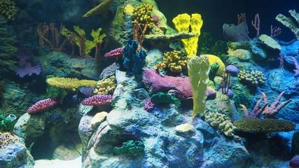 Poster Coral reefs Aquarium display underwater coral reefs