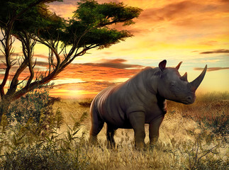 African Rhino in the Savanna at Sunset