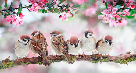 Wall Mural - natural background with birds sitting on branches with pink Apple blossoms in the spring may Sunny garden
