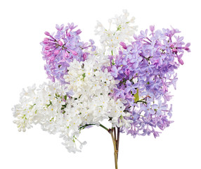 Photo sur Aluminium Lilac bunch from white and violet lilac branches on white