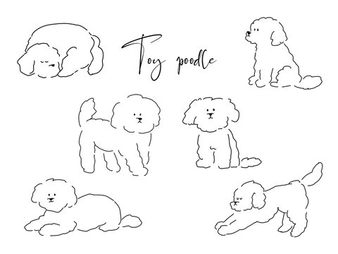 Toy poodle drawn with pen