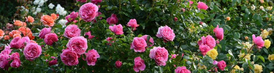 Blumen 1186