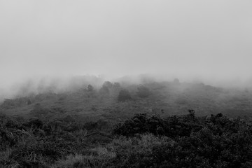 foggy landscape in black and white