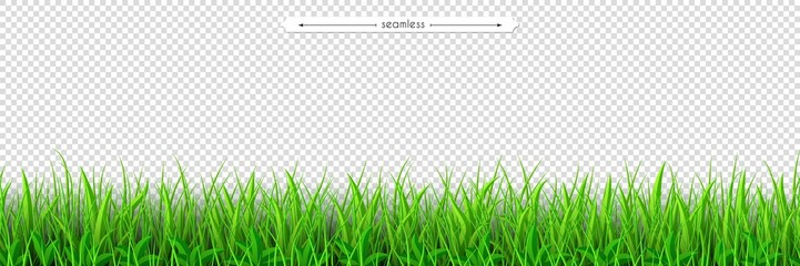 Green grass seamless border. Easter design isolated on transparent background