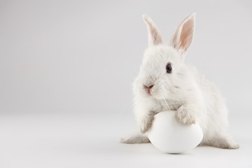 Easter bunny rabbit with white egg