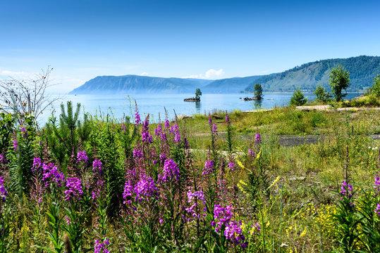 Summer landscape with mountains and purple flowers Ivan Chai on lake Baikal. Circum-Baikal Railway, Siberia. Coastline of most deep clear lake in the world