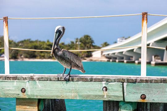 Vögel an der Westküste Floridas