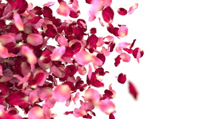 rose petals background