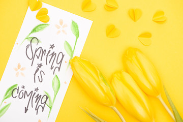Top view of tulips, card with spring is coming lettering and decorative hearts on yellow