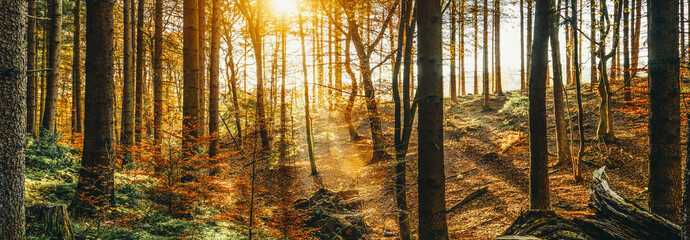 Foto auf Leinwand Honig Silent Forest in spring with beautiful bright sun rays