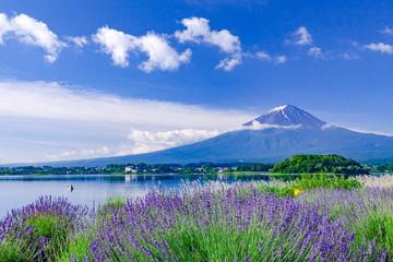 Wall Mural - 富士山とラベンダー、山梨県富士河口湖町大石公園にて