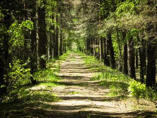 Foto op Textielframe Weg in bos droga