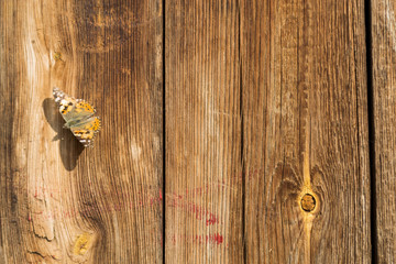 Garden Poster Butterflies in Grunge Cute brown butterfly on a wooden vintage background. Old wood planks texture background. Hive butterfly.