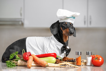Funny cute dachshund dog, in a cap and a suit of the chef, in the kitchen among vegetables and various cookware