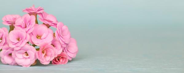 Poster Bloemen Nature, floral web banner, pink flowers on blue background, spring forward, springtime concept. Copy space.
