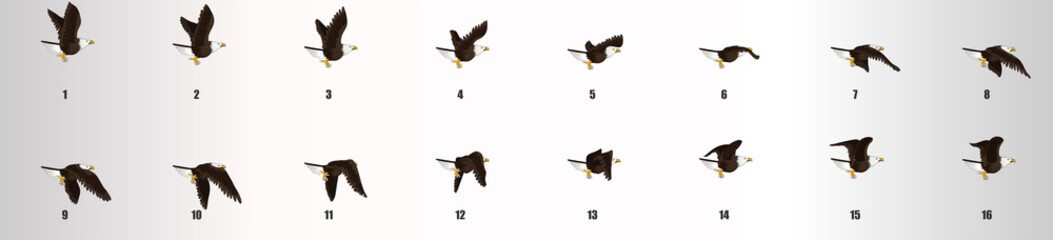 Eagle flying animation sequence, loop animation sprite sheet  Fototapete