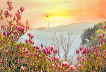 Fantasy picture of a spring sunset on the Bosphorus. Blooming pink magnolia trees and view of the Bosphorus. Istanbul in the spring.
