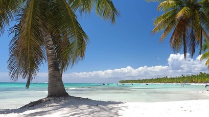 Fototapete - Coconut palm tree on white sandy seashore on caribbean island. Travel destinations. Summer vacations