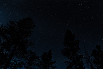 Clear Starry Night Sky in the Forest