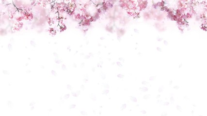 Wall Mural - 舞い落ちる桜の花びら