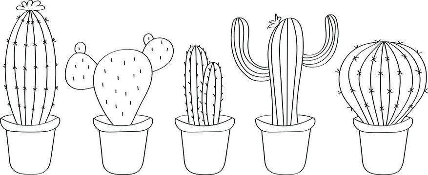 Cactuses is drawn in black doodle style. Coloring book children`s flora, beautiful vector drawing.